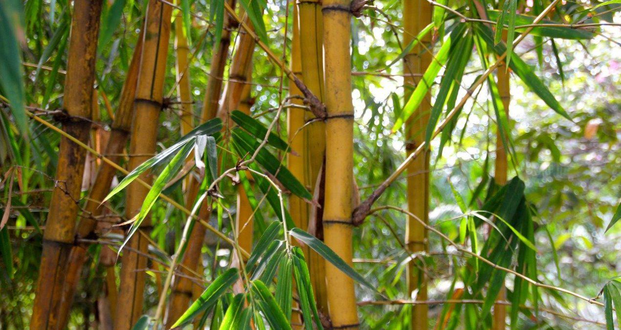 El bambú como material ecológico ¡conócelo!