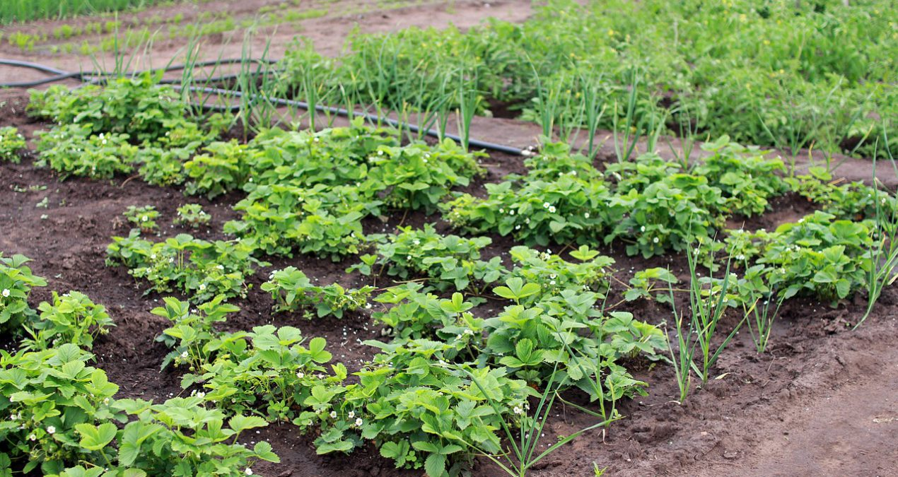 Conéctate con la naturaleza iniciando un huerto orgánico